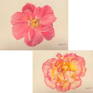 Roses. (2 Ud por modelo)